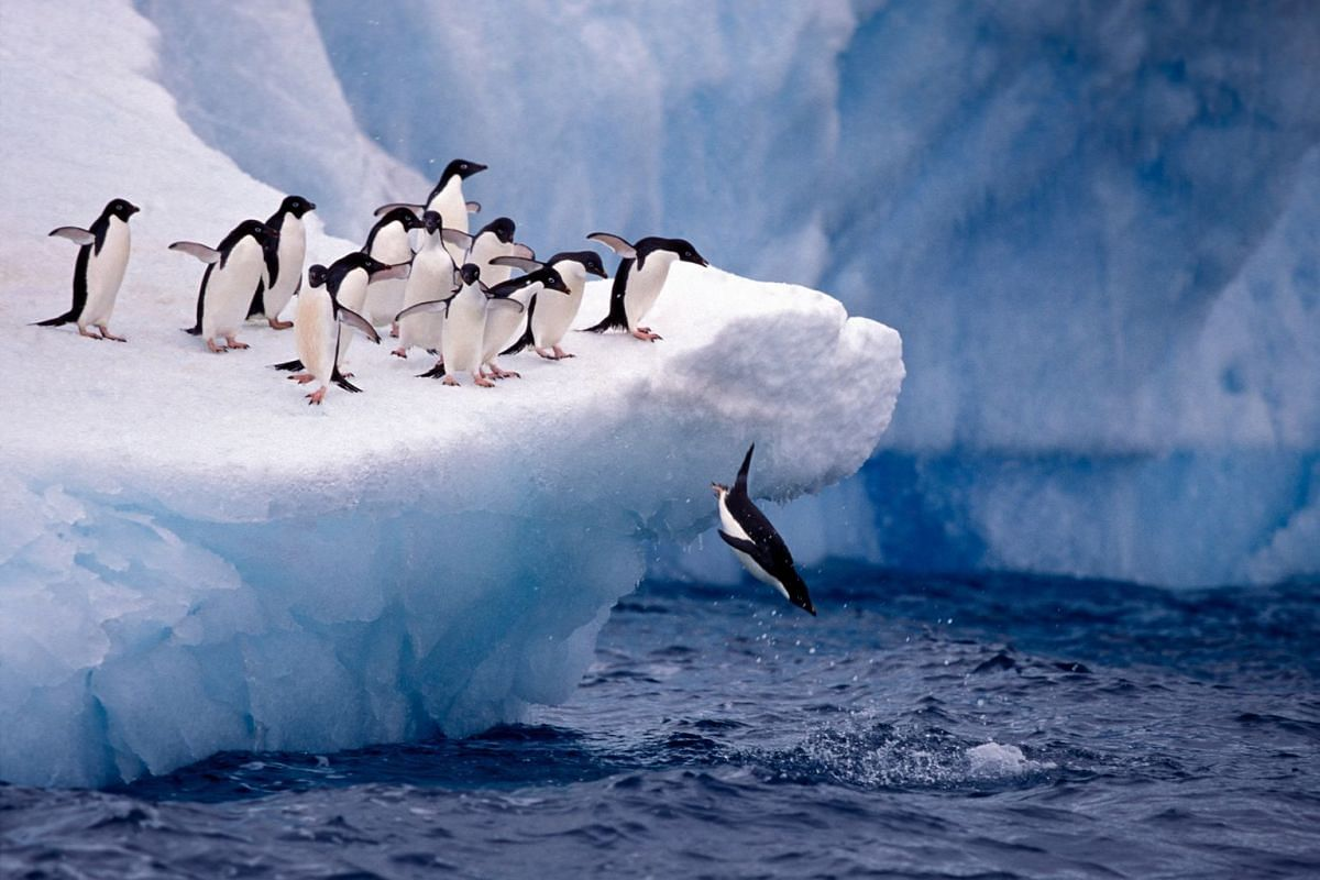 Antarctica (above) is one of the destinations offered by Country Holidays, which was founded by Mr Chang Theng Hwee and recently acquired by Scott Dunn, which is led by group chief executive Simon Russell.