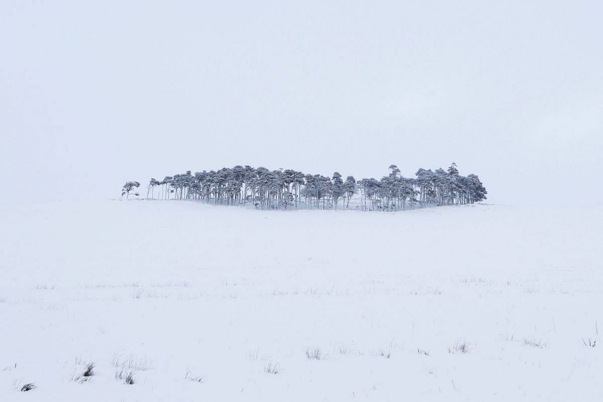 A clump of trees is covered in snow besides the M74 in Lanarkshire, Scotland, January 18, 2018.