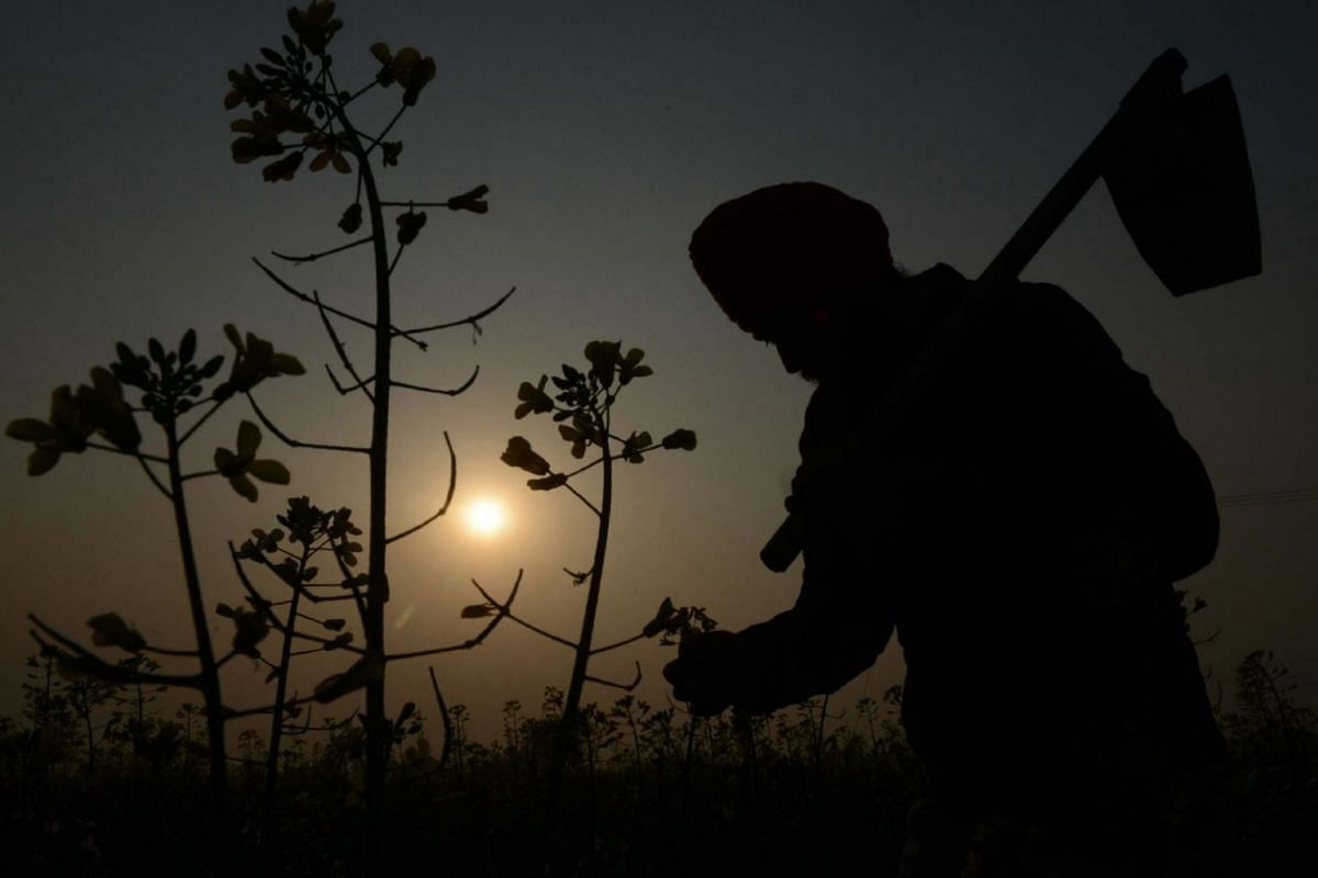 Indian farmer Neeraj Singh holds a shovel as he walks through his mustard field on the outskirts of Amritsar on the eve of the Indian festival of Basant Panchmi, on Jan 21, 2018.