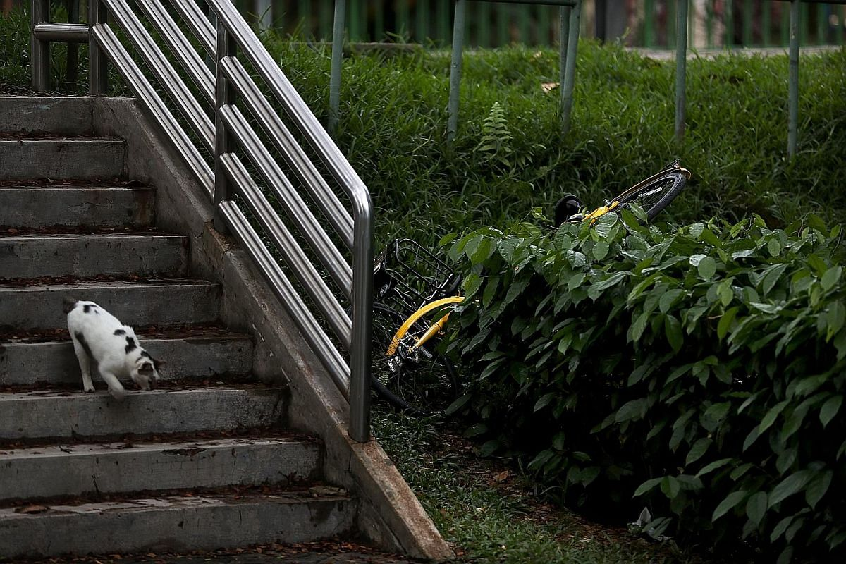 A Mobike stands forlornly in a remote corner of the Chinese Cemetery in Lim Chu Kang. An ofo bicycle lies discarded among the bushes next to a drain in Lorong 1, Toa Payoh. An oBike bicycle stands in the rain in a puddle of water in Rutland Road, nea