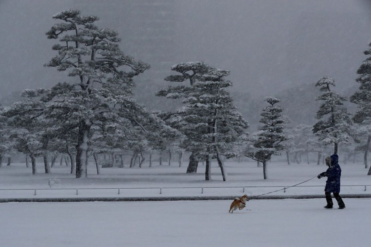 A woman and a dog make their way in the heavy snow at the Imperial Palace in Tokyo, Japan on Jan 22, 2018.
