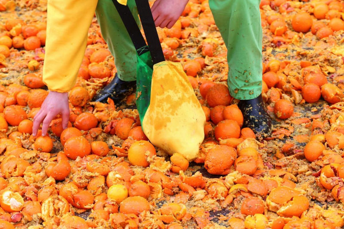 A member of a team collects oranges during an annual carnival battle in the northern Italian town of Ivrea, Italy on Feb 11, 2018.