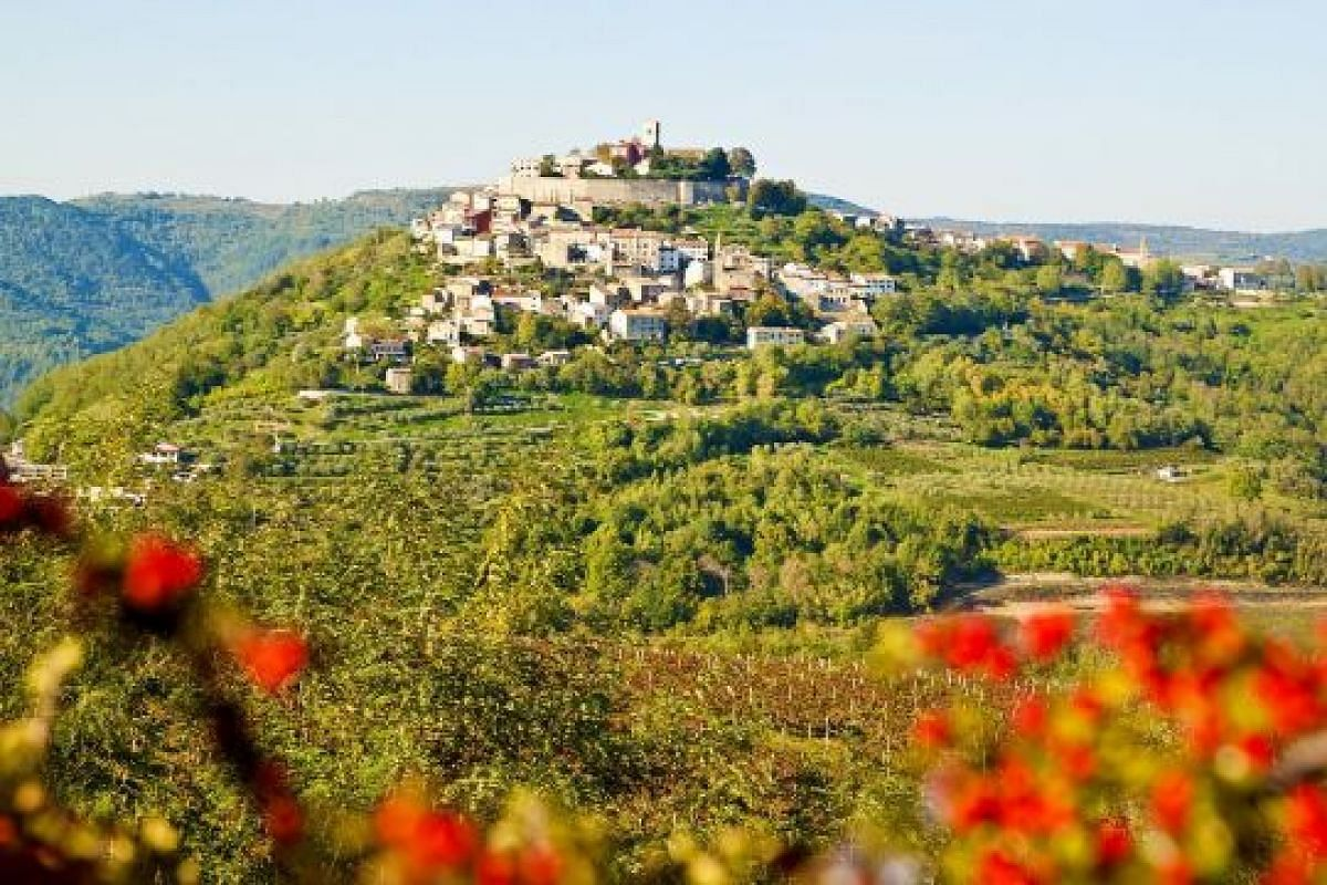 Motovun sits majestically above a medley of vineyards (above), wheat fields and newer houses that have settled along the leafy-green slopes.