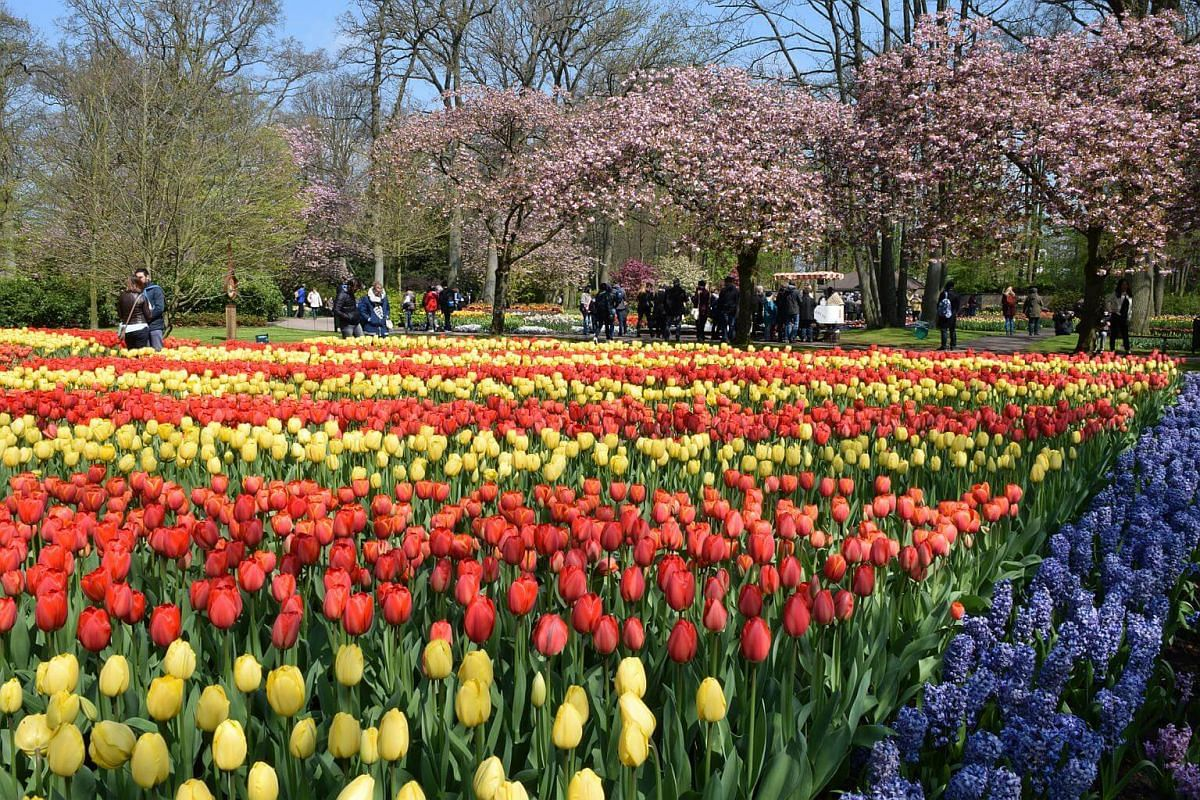 The best time to visit the Keukenhof Gardens is from mid-March to mid-May.