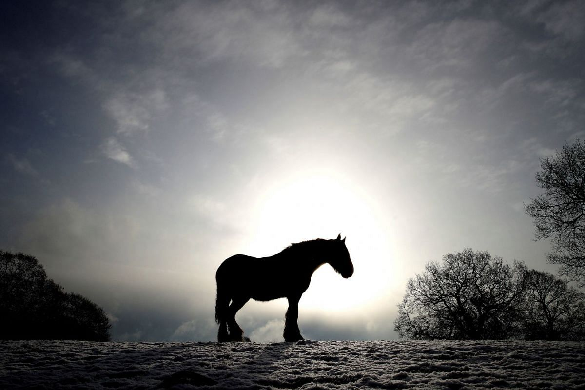 A horse stands in a snow covered field in Keele, Newcastle-under-Lyme, Britain, on Feb 27, 2018.