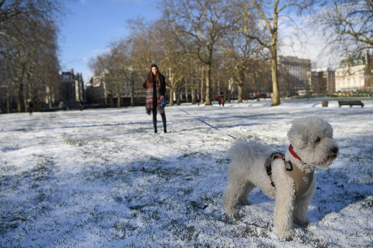 A woman walks her dog through Green Park after a snow flurry in central London, Britain, on Feb 27, 2018.