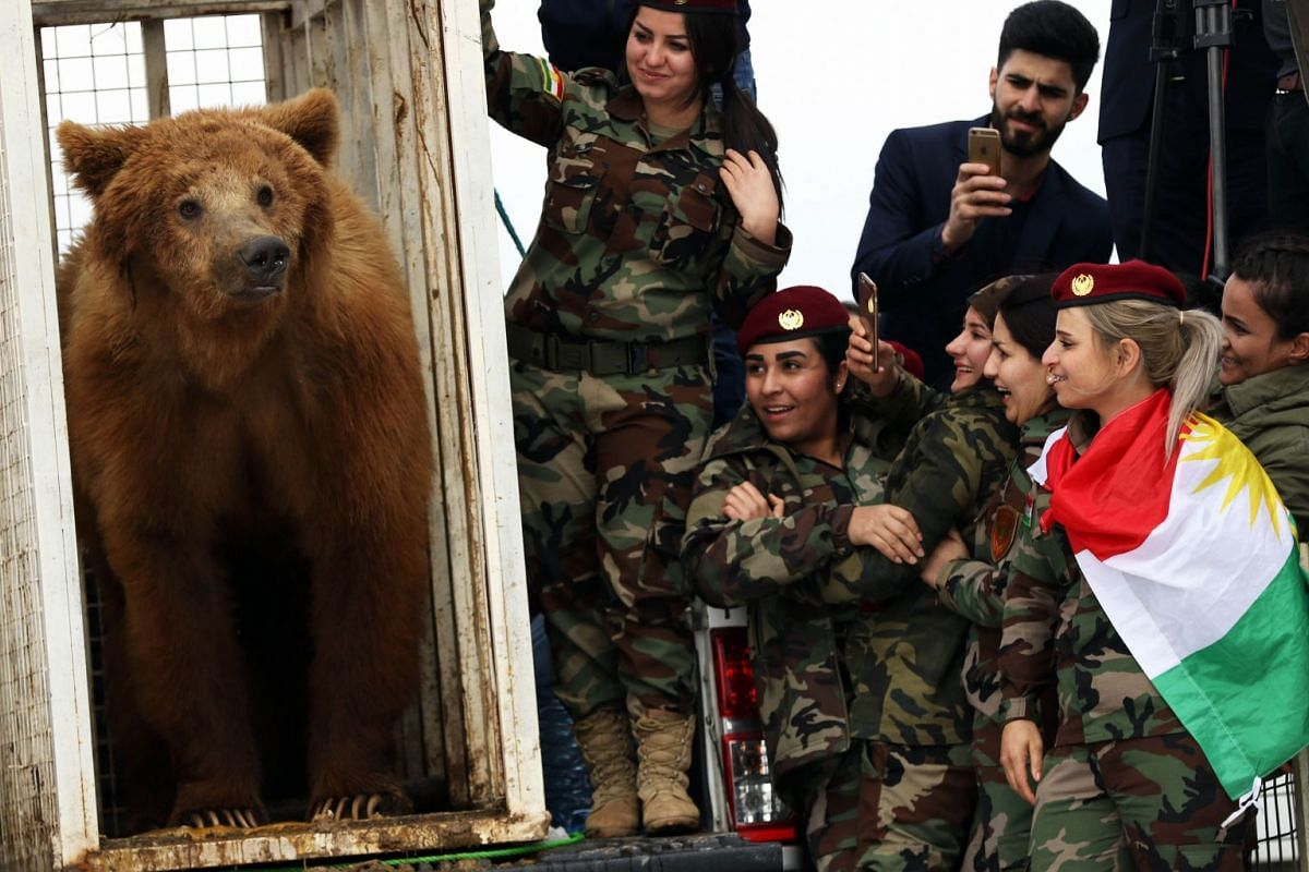Female Iraqi Kurdish peshmerga fighters watch on as they release a bear into the wild in the Gara Mountains near the northern Iraqi city of Dohuk on March 4, 2018, after Iraqi Kurdish Animal rights activists from a local NGO rescued it from a private