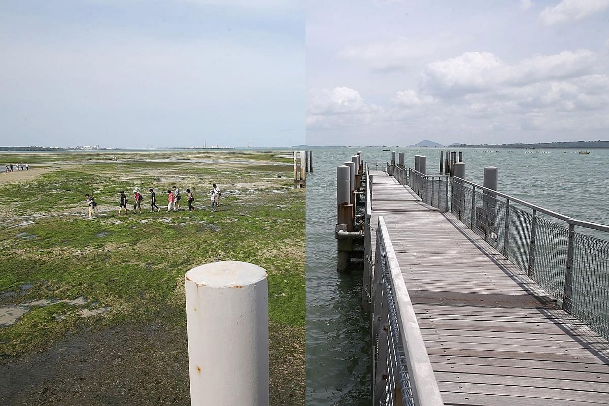 12.05pm, Feb 28, 2018 (right): A nondescript floating pontoon at Chek Jawa Wetlands which seems to lead nowhere. 4.03pm (left): As the tide falls below 0.5m, an intertidal zone is exposed, revealing a treasure trove of marine life. A guided tour by NParks
