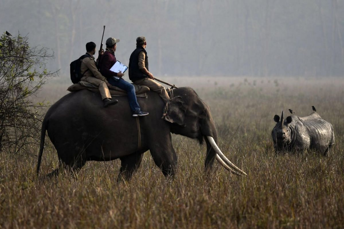 Forest officials ride on an elephant while counting Rhinos during inside the Pobitora Wild Life Sanctuary in the Morigaon district of Assam state, India, on March 18, 2018.