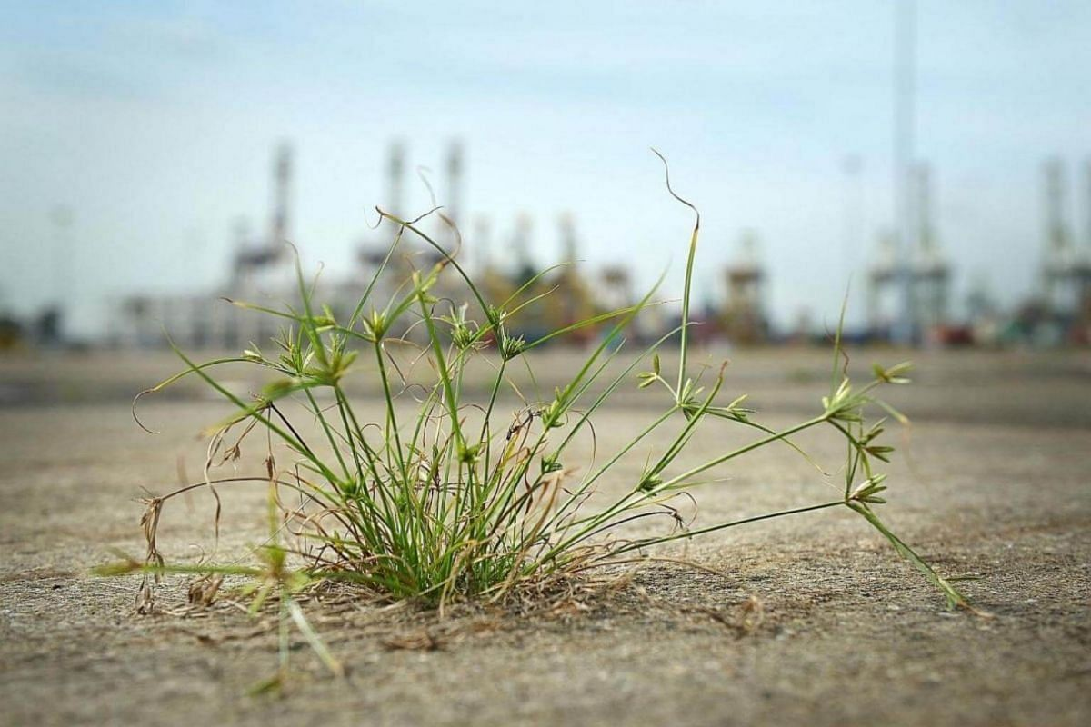 Within months of ceasing operations, weeds have taken root in cracks and crevices in the concrete apron of the terminal.
