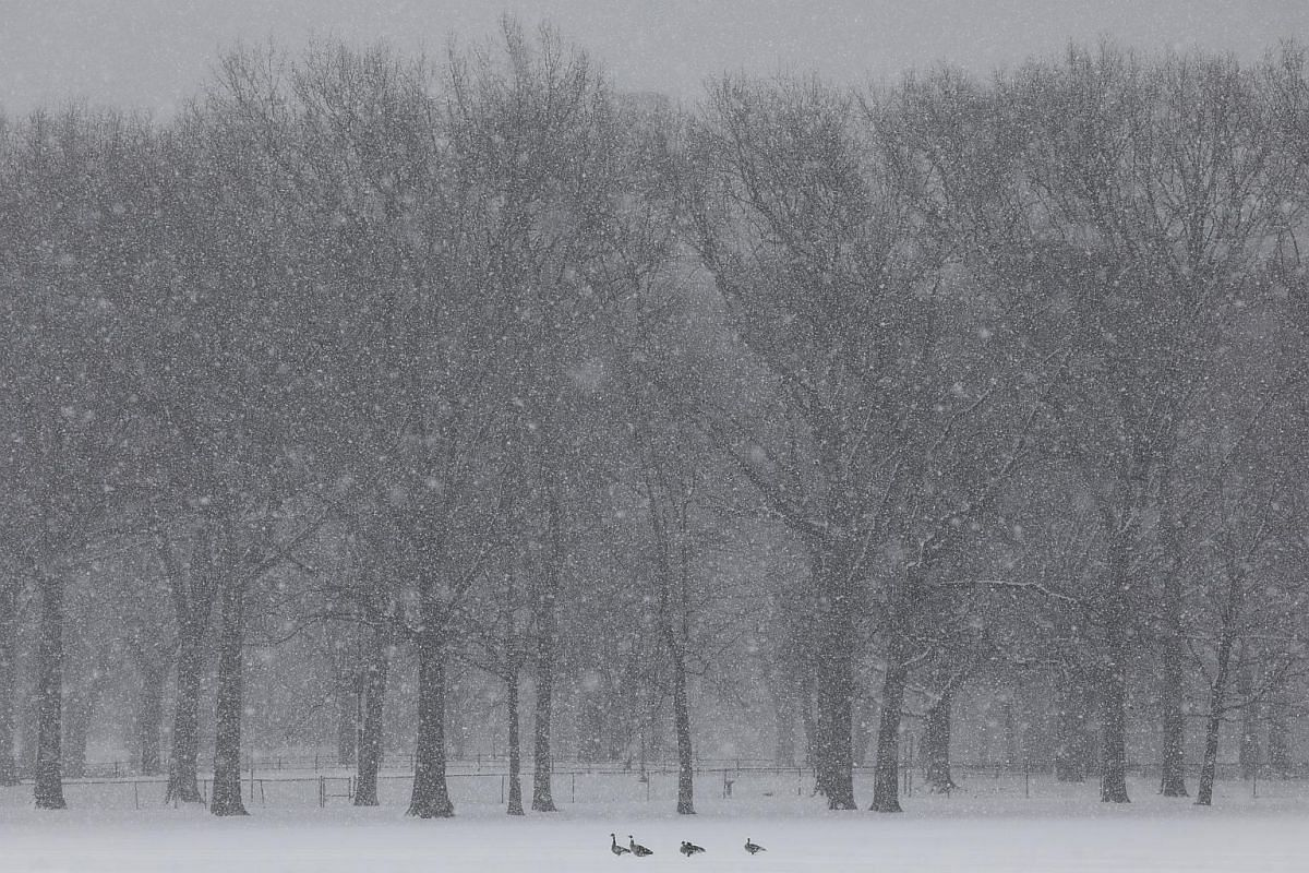 A few geese in Central Parks' Sheep Meadow during a late season snowstorm in New York, New York, USA, on March 21, 2018.