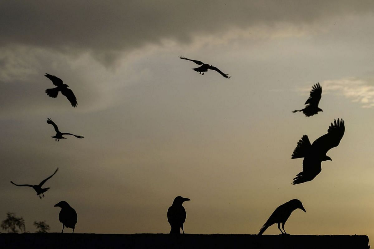 Birds during sunset after a rainy day in Jalandhar.