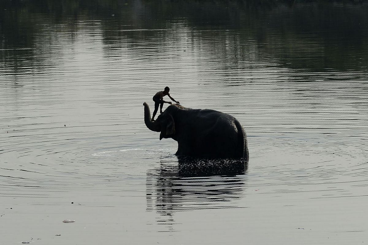 An Indian mahout washes his elephant in the Yamuna River in New Delhi, on April 3, 2018.