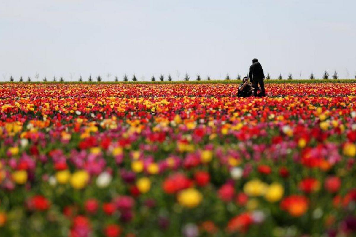 People enjoy the tulip fields of Asya Tulip Company in Konya, Turkey, on April 5, 2018.