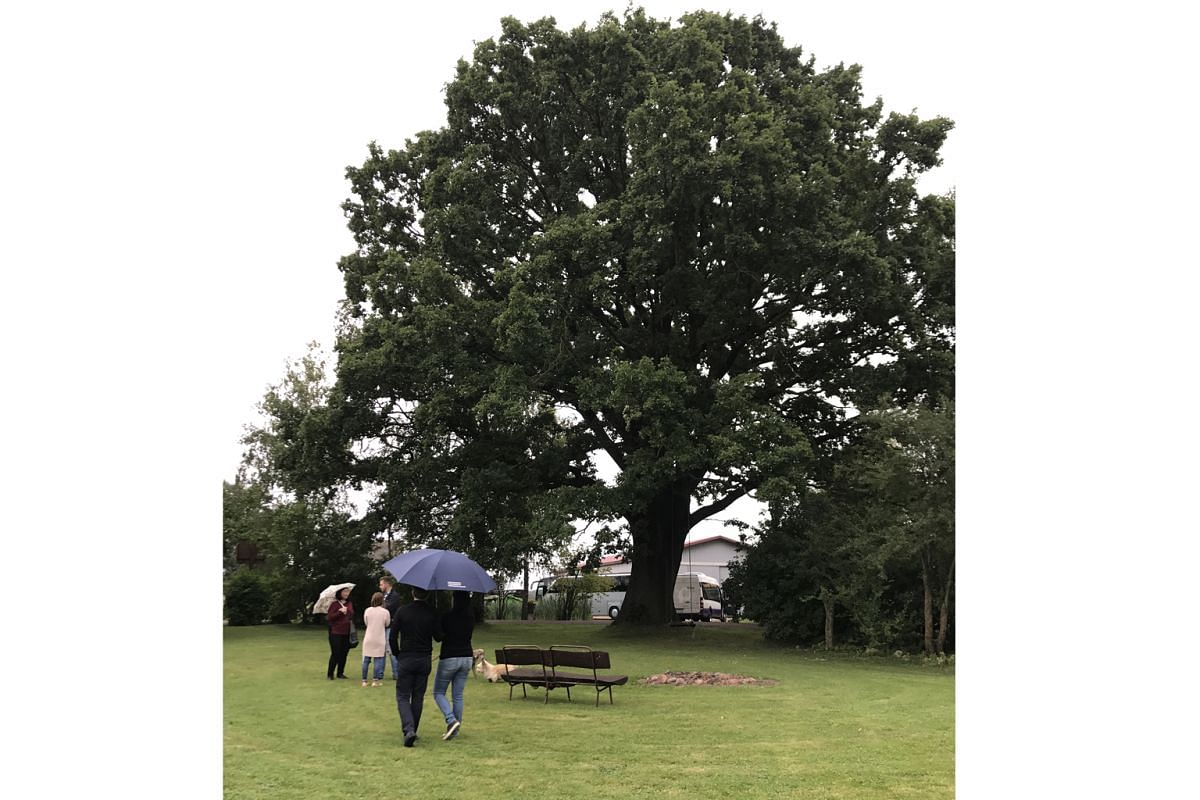 Vaidelotes farm contains one of Latvia's Great Trees, a sacred 850-year-old oak.