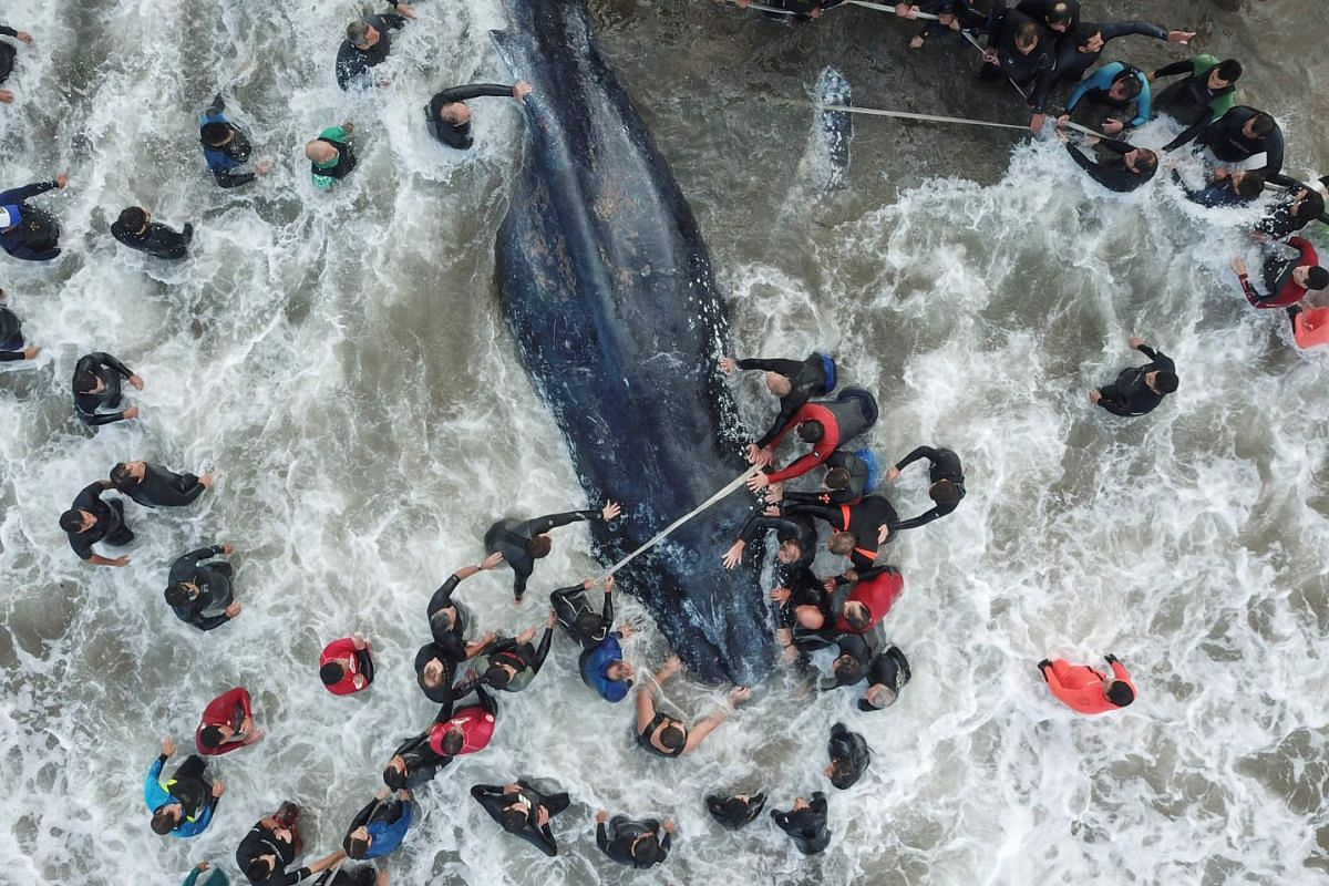 A picture released by Telam showing rescue workers and locals helping a stranded whale in Mar del Plata, Argentina, on April 9, 2018. The whale died despite rescue efforts. PHOTO: TELAM VIA AFP