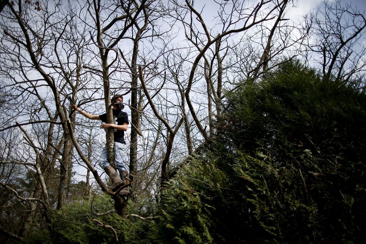 A protester cuts branches from a tree for a barricade as French gendarmes continue an evacuation operation in the zoned ZAD (Deferred Development Zone) at Notre-Dame-des-Landes, near Nantes, France, April 12, 2018. PHOTO: REUTERS