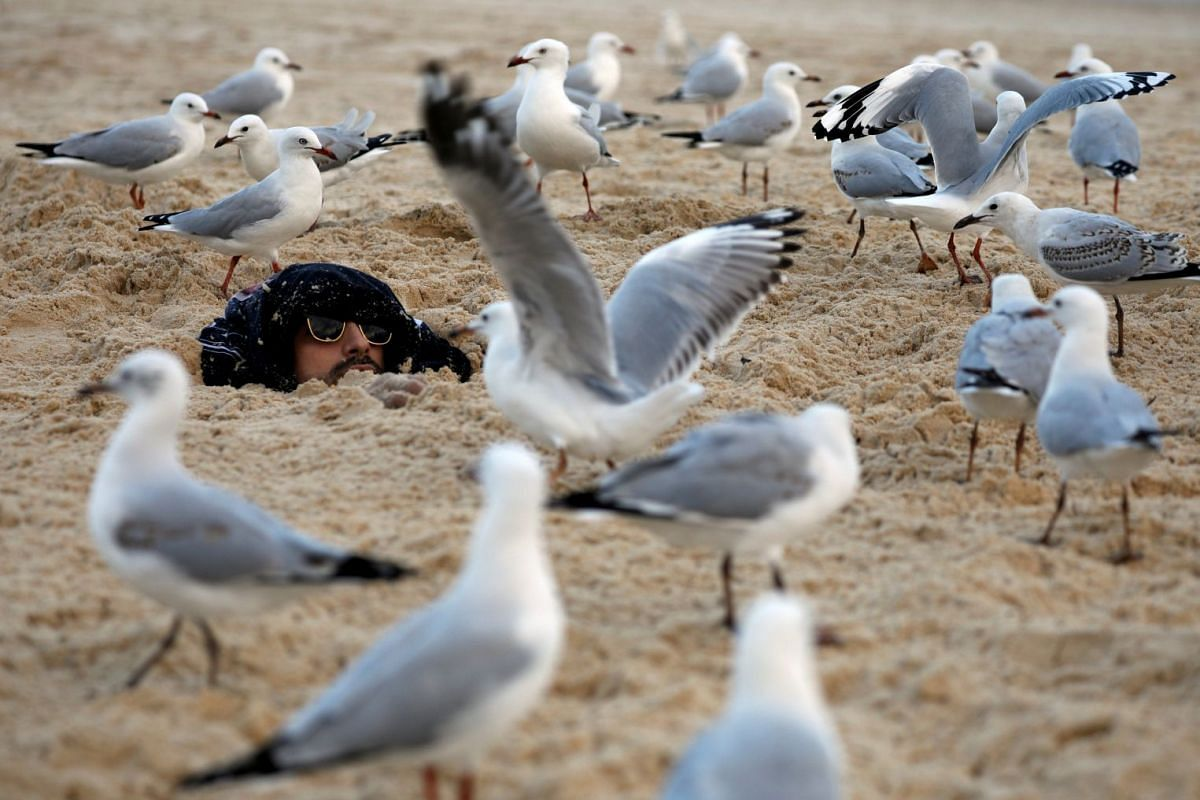 Seagulls surround a man who was buried by his friends in sand and crackers at Bondi Beach in Sydney, Australia April 20, 2018.