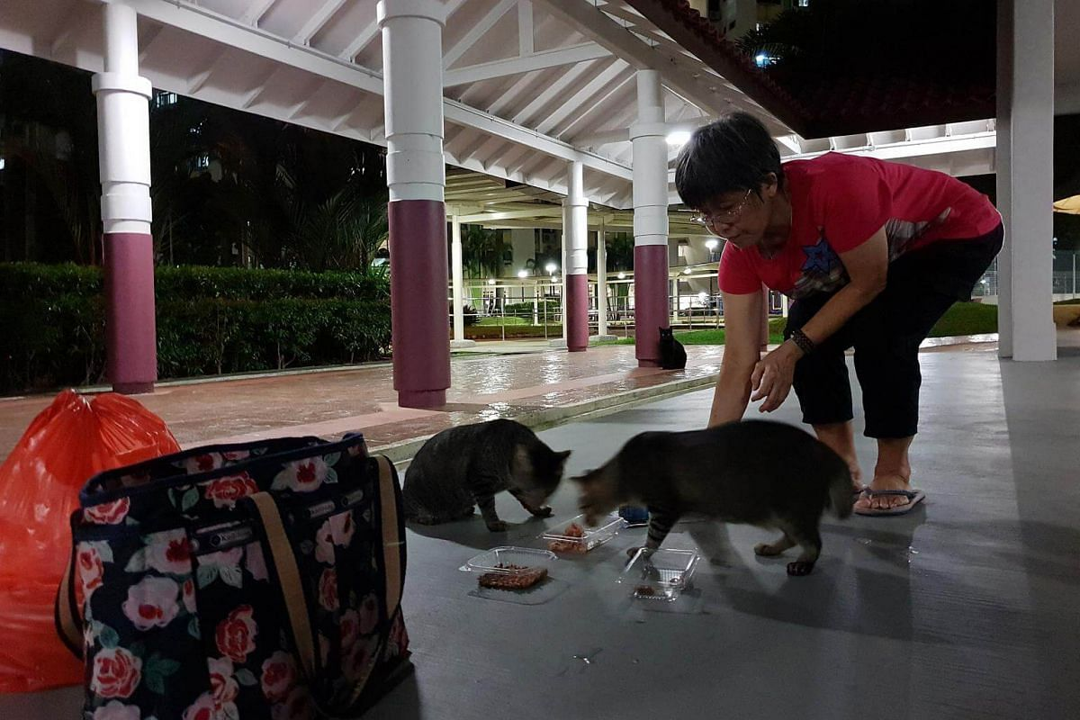 Madam Law looks on as two stray cats at a void deck in Clementi dig into the food she bought for them - something she has been doing every night without fail since 1995.