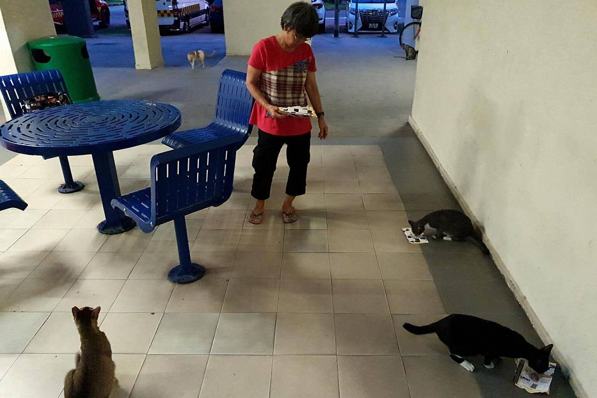 "Madam Law watches as the cats tuck into the food. ""Cats are part of society. I'm just doing my part to make their lives worthwhile,"" she said."