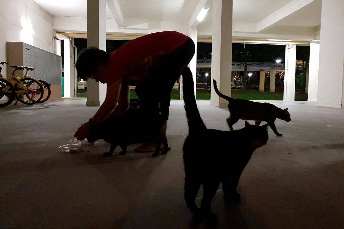 For up to three hours each night, Madam Law distributes cat food to about 30 cats in Clementi.
