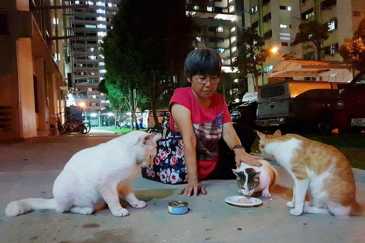"Madam Law often joins the cats as they eat, talking to them and stroking them. ""We must love the cats who have been injured or abandoned with a selfless love,"" she said."