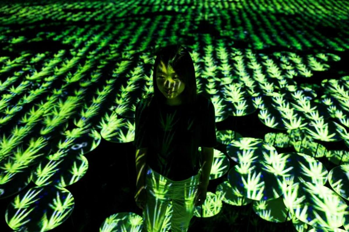 A digital installation bucolic rice field, at Mori Building Digital Art Museum in Tokyo on May 1, 2018.