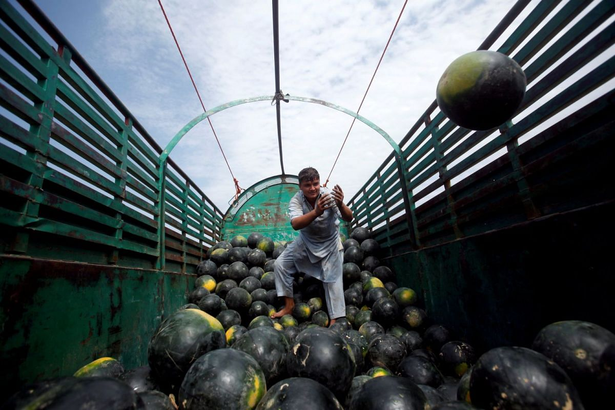A labourer unloads watermelons from a truck at vegetable and fruit market in Peshawar, Pakistan, May 3, 2018.