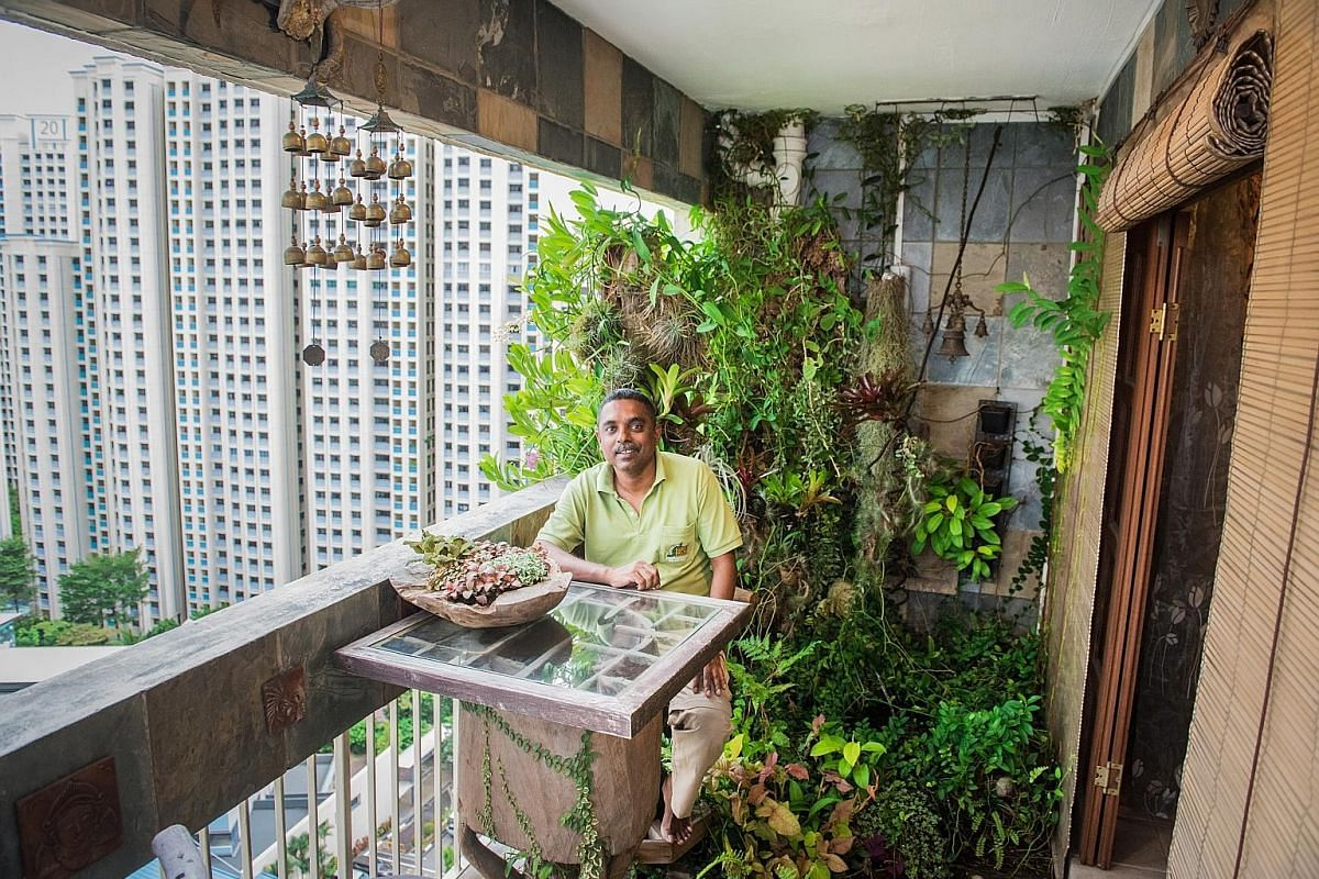 The plants in the balcony garden of Mr G.S. Selvam (right) are grown in lava chips and coco peat in teak and volcanic rock planters as well as on nutrient-rich slabs of cedar limestone.