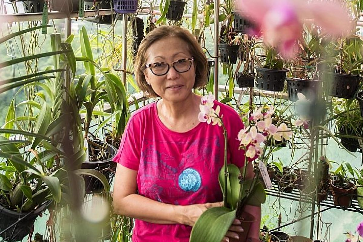 Orchids (far left and above) in the balcony garden of retiree Peggy Yap (left).