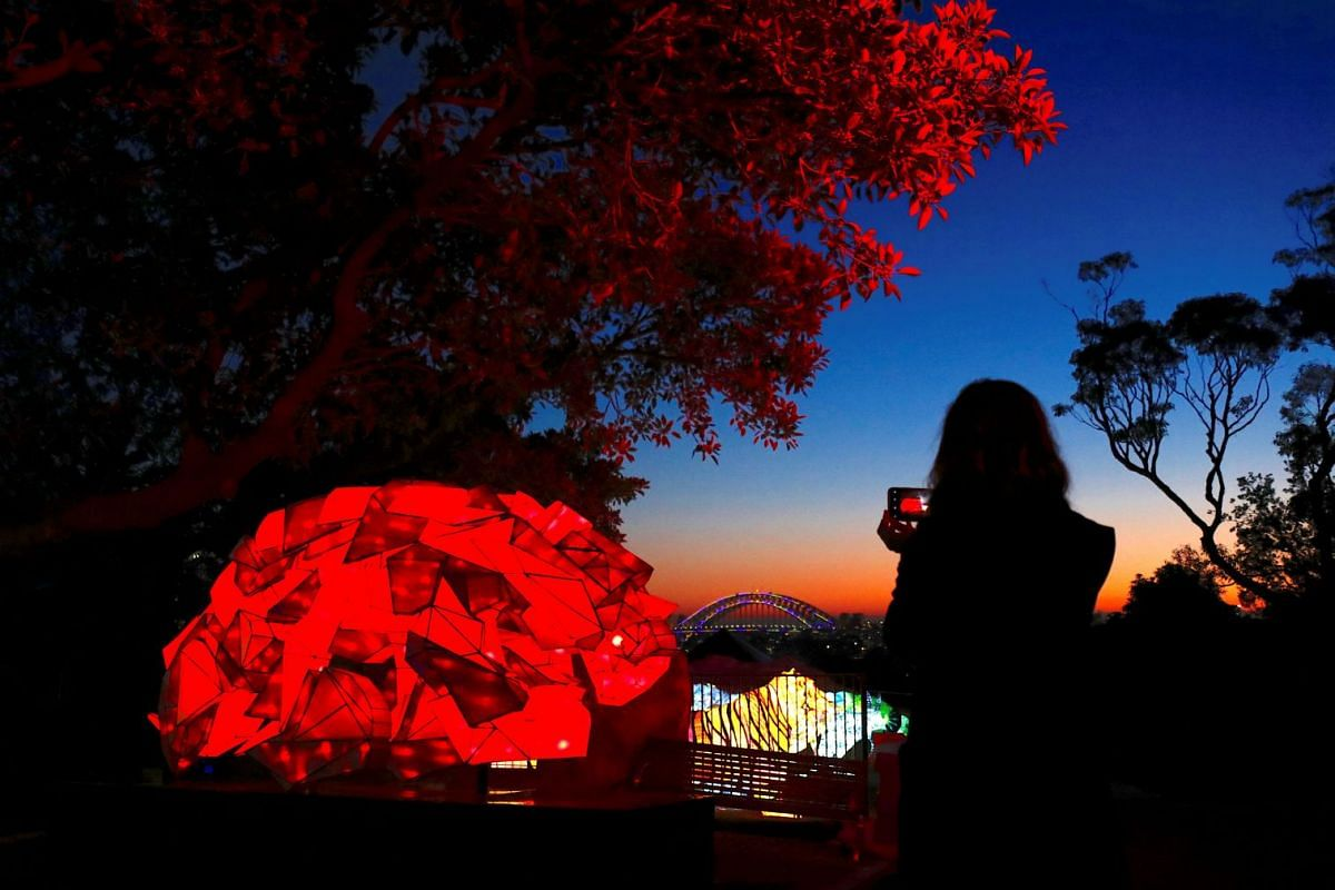 A woman uses her iPhone to take photographs of illuminated sculptures shaped as animals during a preview of Vivid Sydney, promoted as the world's largest festival of light, music and ideas, at Sydney's Taronga Zoo in Australia, May 20, 2018. The fe