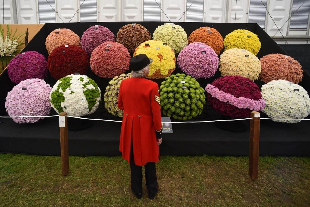 A Chelsea pensioner poses next to a Chrysanthemum display at the 2018 Chelsea Flower Show, on May 21, 2018.