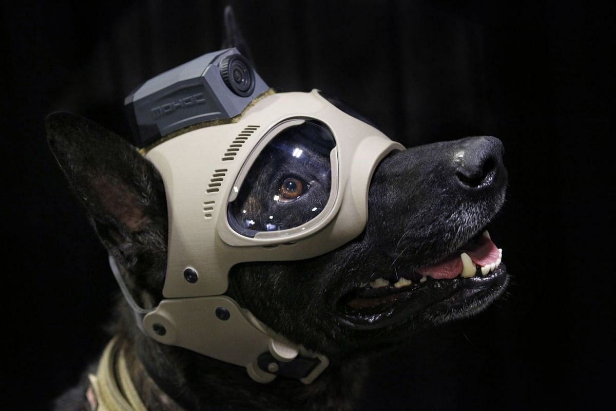 A military working dog wears protective goggles and tactical gear during the Special Operations Forces Industry Conference (SOFIC) in Tampa, Florida, U.S., on Tuesday, May 22, 2018. The conference offers the SOF community a place to interact with ind