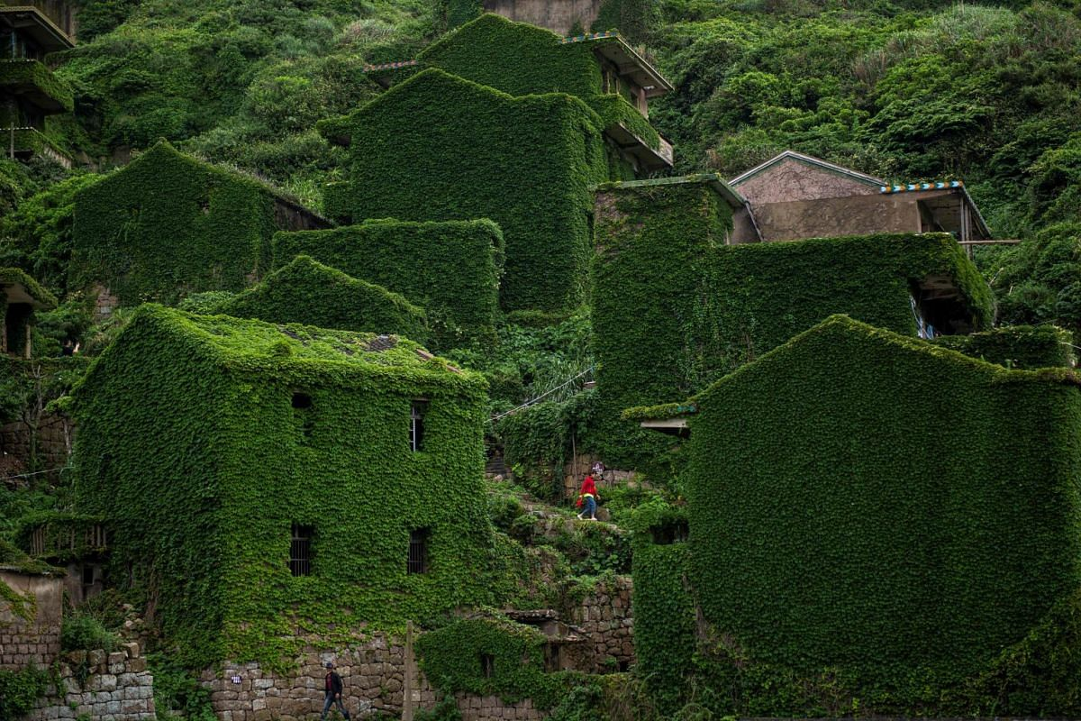 A photo released on June 6, 2018 shows a villager walking between abandoned houses covered with overgrown vegetation in Houtouwan on Shengshan island, China's eastern Zhejiang province, May 31, 2018. PHOTO: AFP