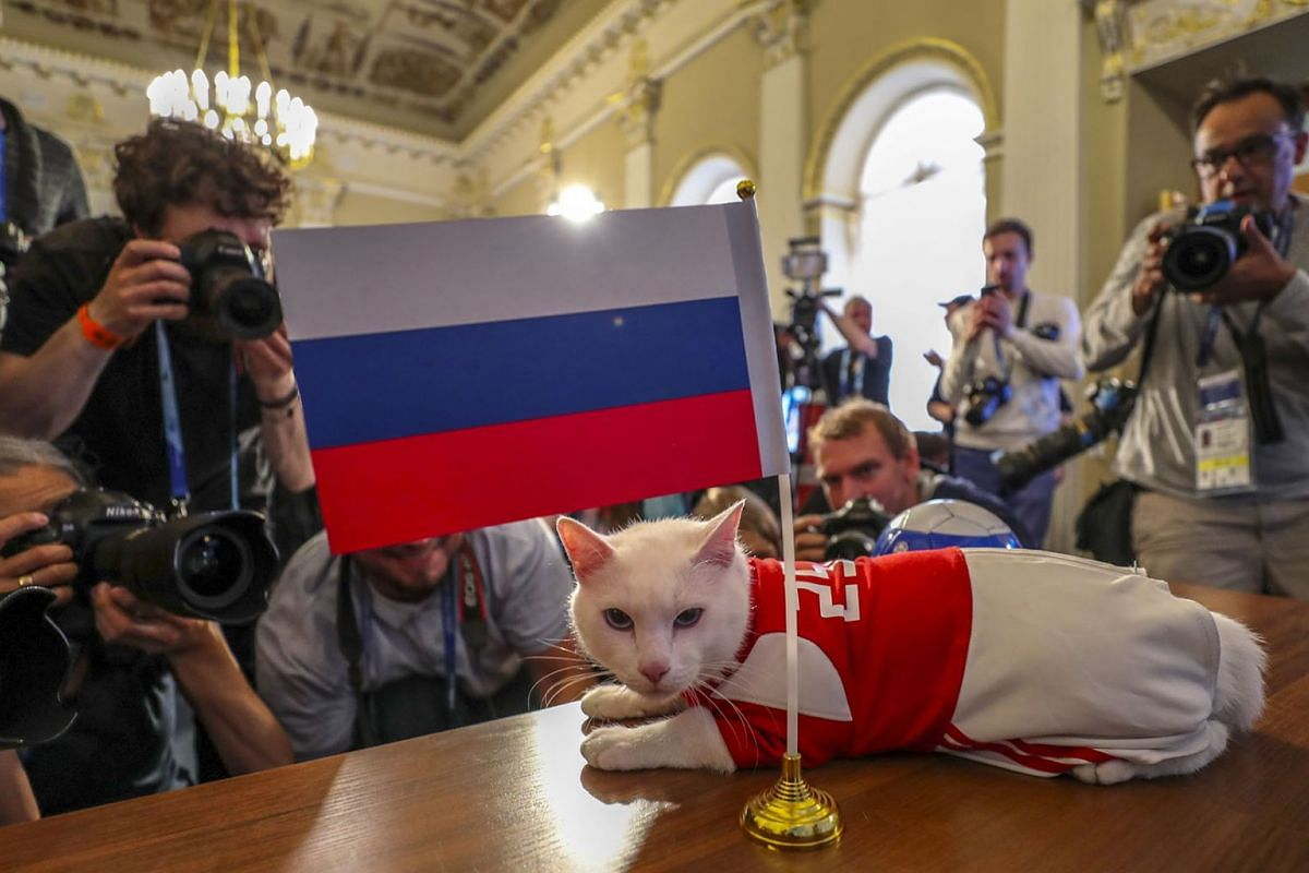 The Hermitage cat Achilles after predicting Russia as the winner of the opening game of the 2018 FIFA World Cup between Russia and Saudi Arabia at the House of Journalists in St. Petersburg, Russia, June 13, 2018. PHOTO: EPA-EFE