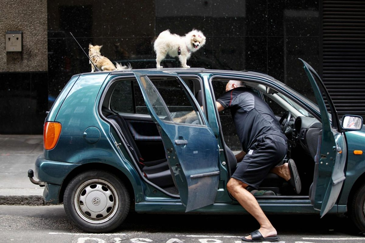 A man cleaning his car whilst his dogs sit on its roof, near Oxford Street in central London, on June 19, 2018. PHOTO: AFP