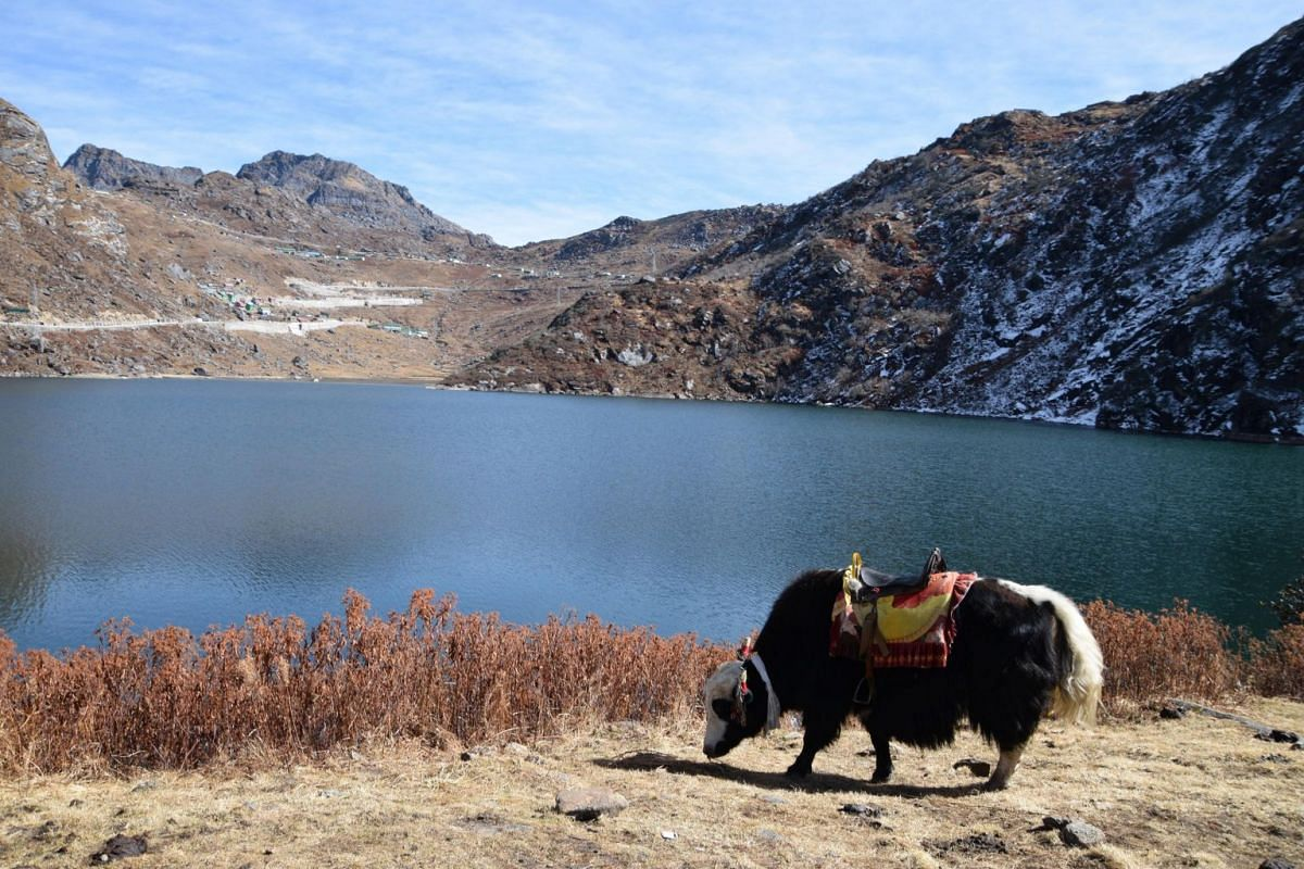 A decorated yak at the sacred Tsomgo lake, waiting to give visitors a ride.