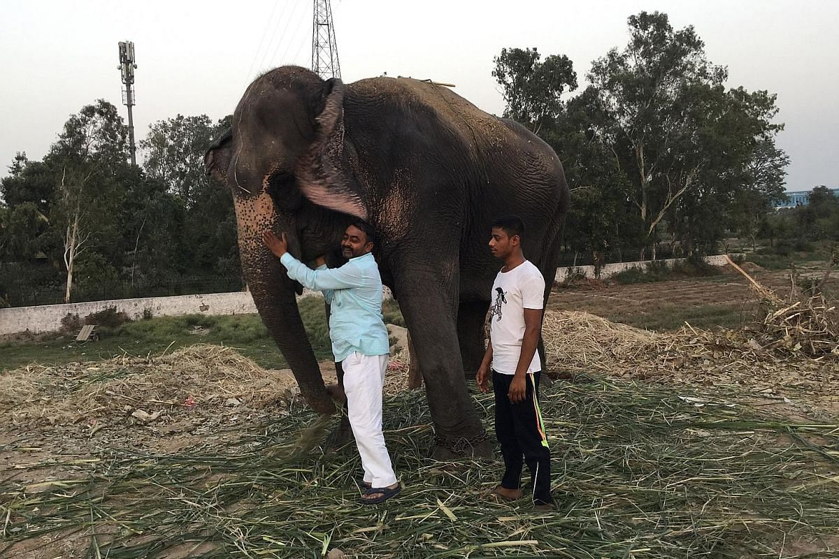 Elephants near a bridge on the Yamuna River in Delhi. For decades, elephants have been a regular as well as popular sight on the river's bank. People come to worship them or interact with them at close quarters. Left: Owner of Dhaunmati the elephant,
