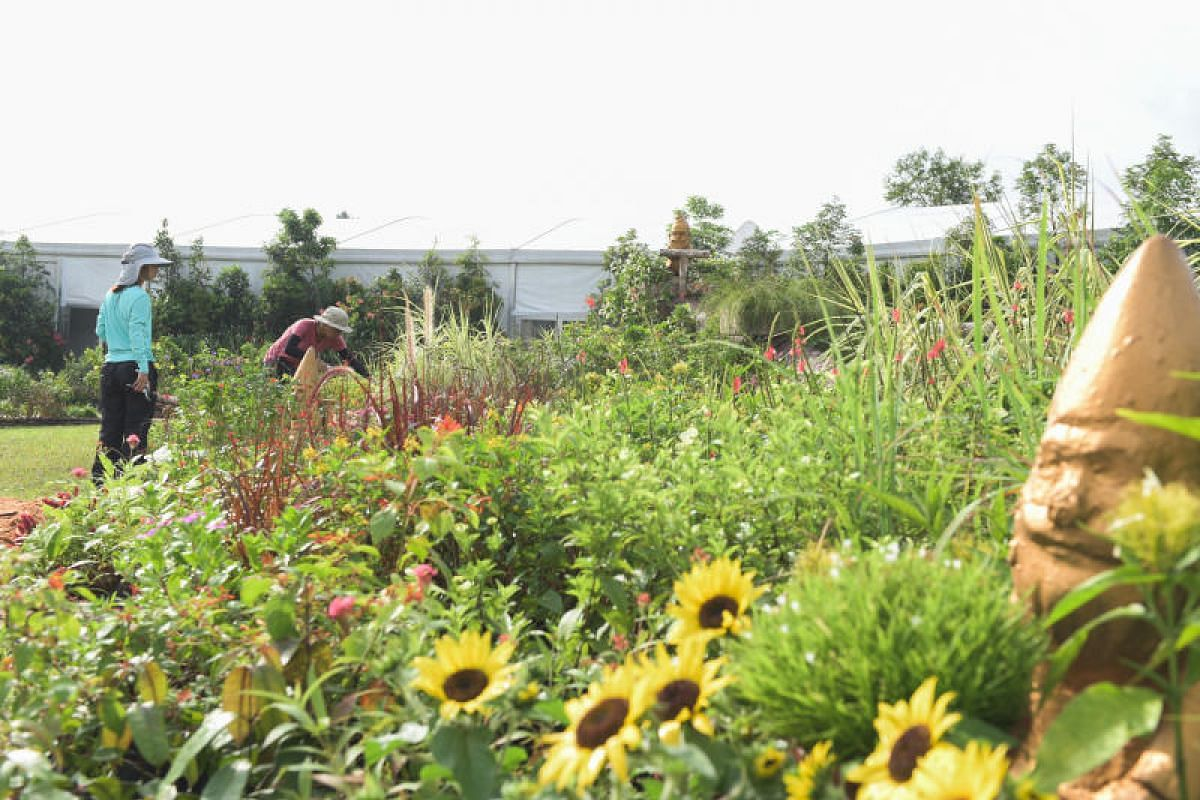 This flower field, near the balcony garden displays, evokes the feel of an English garden. It showcases plants such as sunflowers, cat's whiskers and the Brunfelsia pauciflora, a shrub with purple, lavender and white blooms.