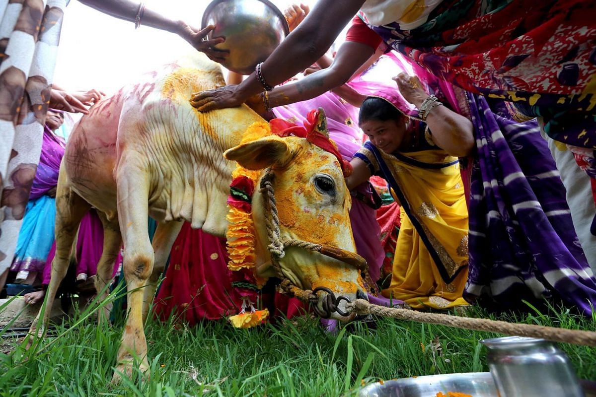 Women villagers perform rituals as they arrange a marriage ceremony of a cow named Nandini at village Kalara, about 50 kms from Bhopal, India, 16 July 2018. The wedding of a cow and a bull was arranged in a Hindu ceremony to appease lord Indra, the H