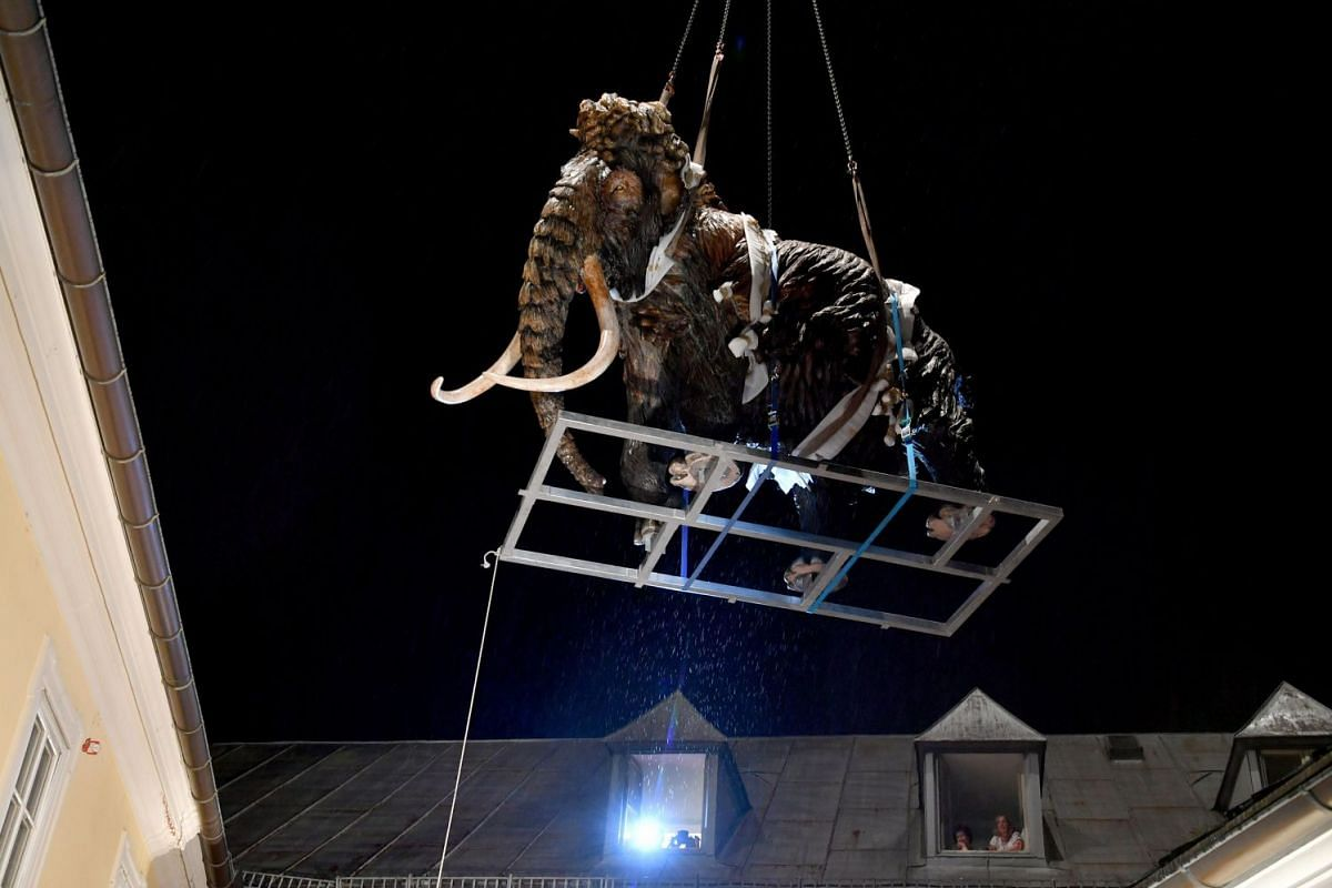"""A life-sized wooden mammoth is lifted by a crane inside the courtyard of the museum """"House of Nature"""" ahead of an exhibition called """"Ice Age and Climate"""" on early July 18, 2018 in Salzburg, Austria. PHOTO: AFP"""
