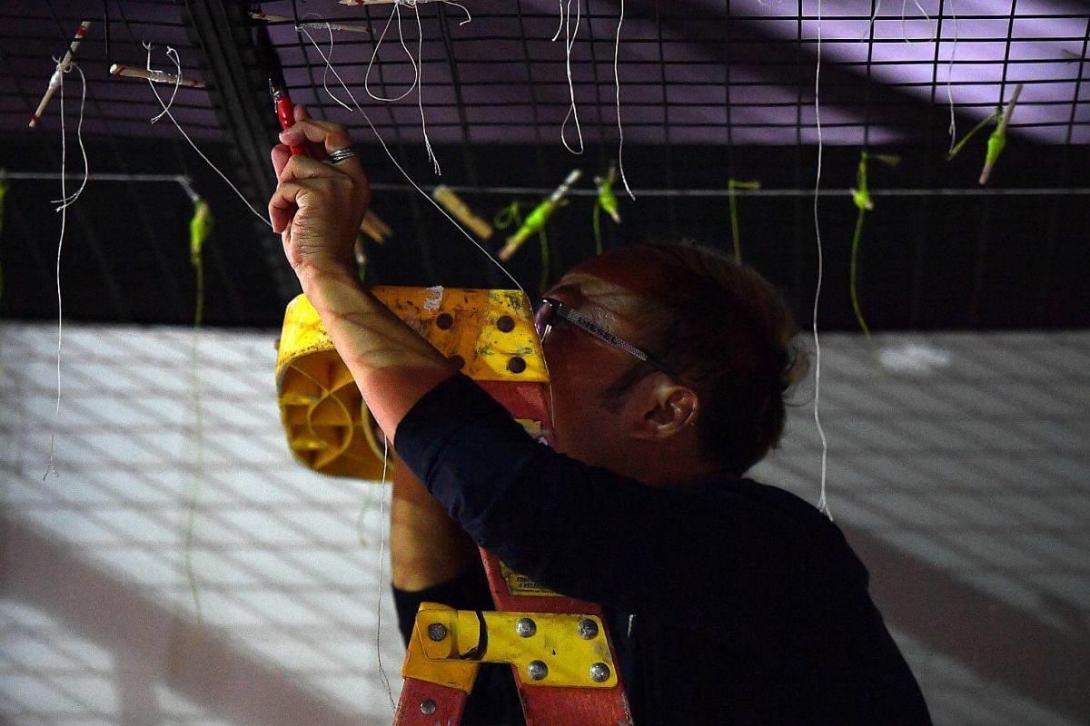 Keith doing a touch-up by painting on the structure of his floral window display at Gardens by the Bay, on July 16, 2018.
