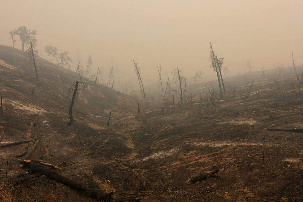 Hills are bare after being burned in the Carr Fire near Igo, California, U.S. July 29, 2018. PHOTO: REUTERS
