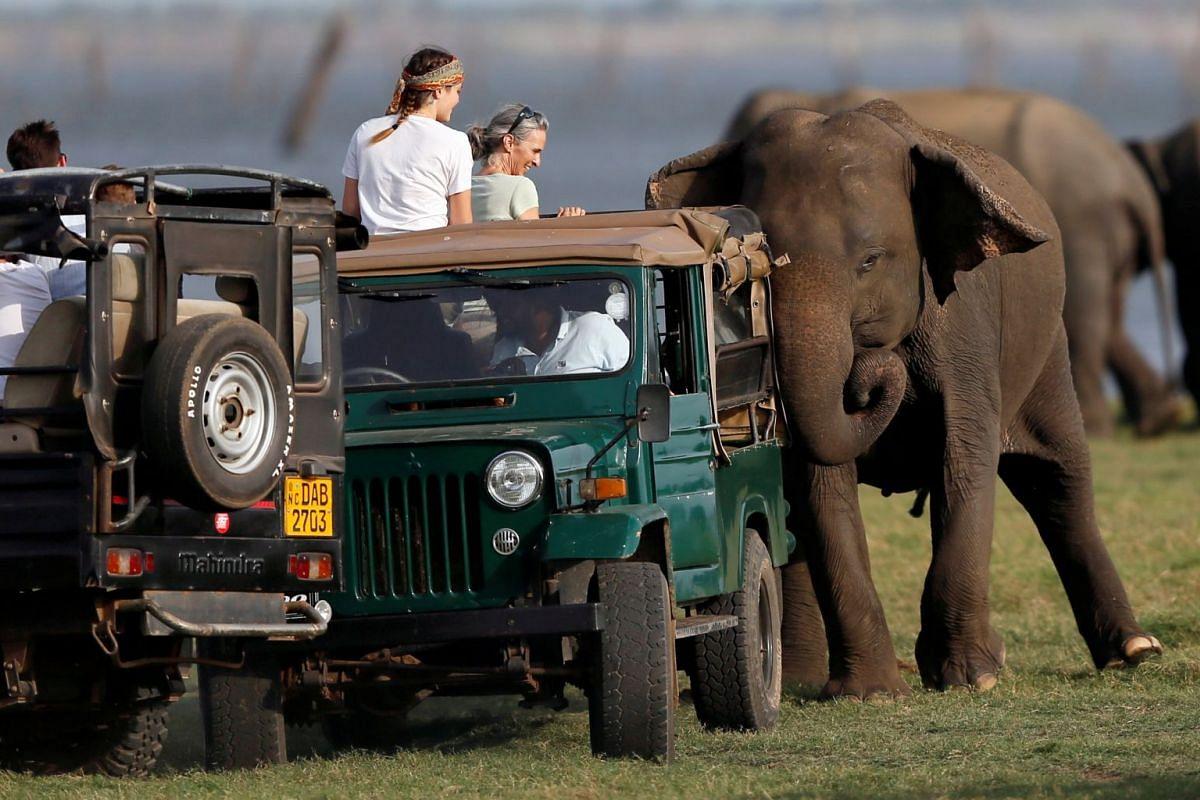 A wild elephant chases a touristic safari jeep at Kaudulla national park in Habarana, Sri Lanka July 30, 2018. PHOTO: REUTERS