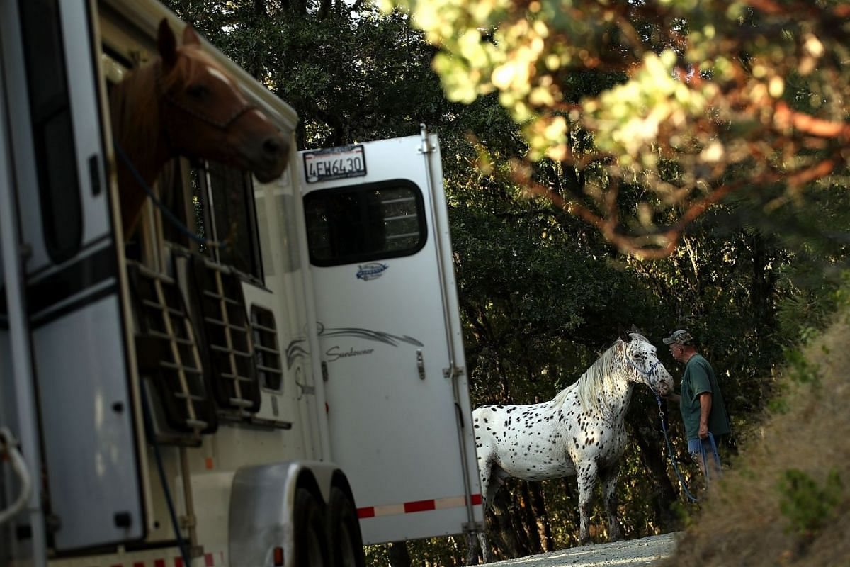 Rich Newell trying to get his horse, Ike, into a trailer as he evacuates ahead of the approaching Carr Fire in Lewiston, California, on July 28, 2018.