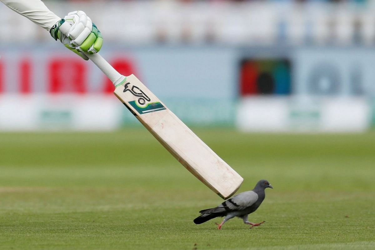 England's Keaton Jennings tries to distract a pigeon during the  England vs India cricket match at Edgbaston, Birmingham, Britain on August 1, 2018. PHOTO: ACTION IMAGES VIA REUTERS