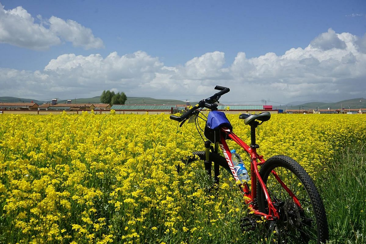 Chaka Salt Lake and rapeseed fields (above) are among the sights.