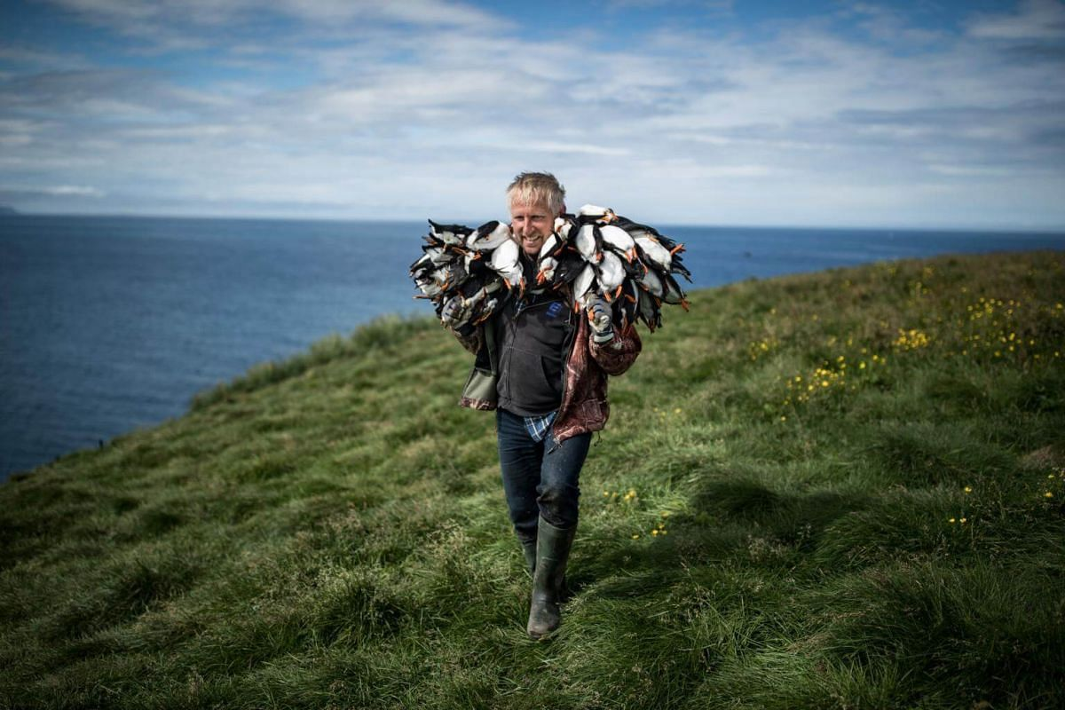 A hunter carries his catch of puffins on Lundey Island, off the north coast of Iceland, on July 25, 2018.