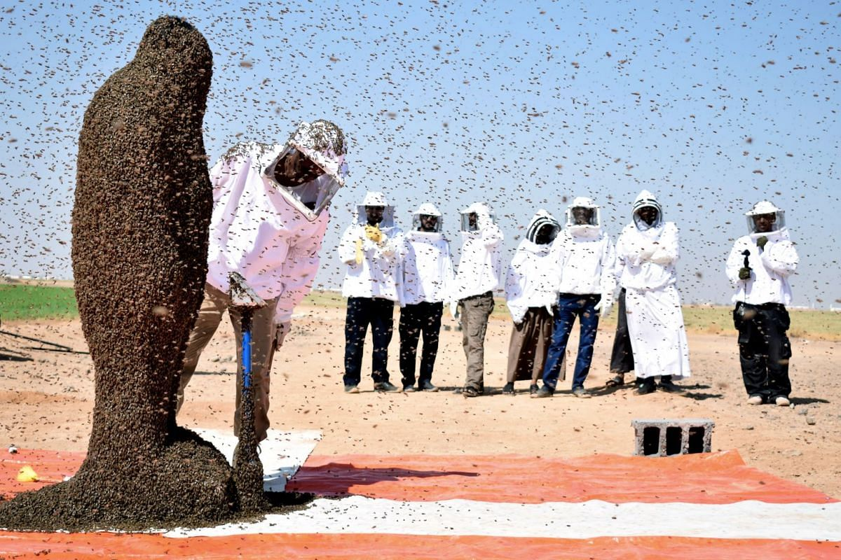 A Saudi man with his body covered with bees poses for a picture in Tabuk, Saudi Arabia, on Sept 11, 2018. PHOTO: REUTERS