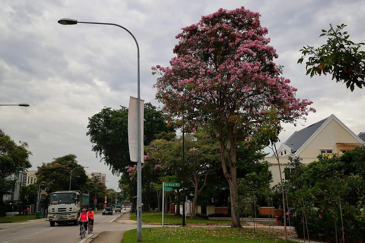 A tree with blooming flowers seen along Bedok Road, on Sept 10, 2018.